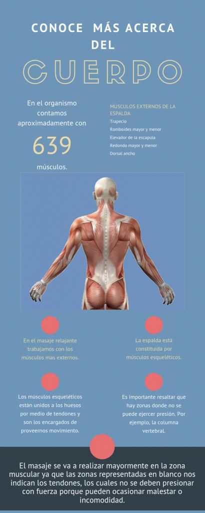 Anatomía del cuerpo para masajes