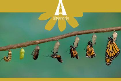 tranformación de personaje: de oruga a mariposa