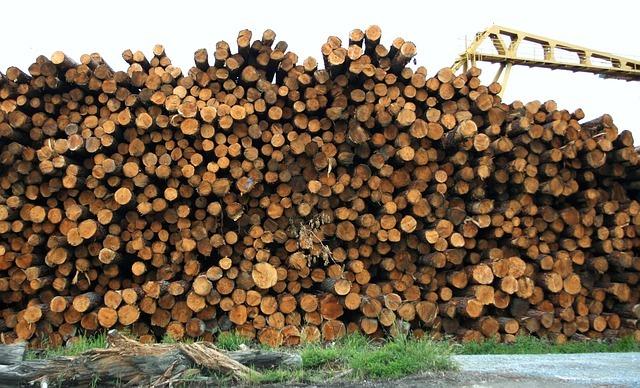 Arboles cortados por la deforestación