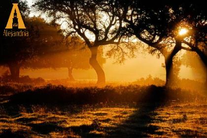 reflejo rayos del sol