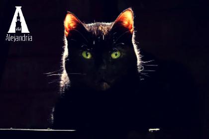 gato negro a contraluz